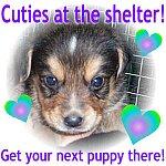 Adopt a shelter pet!